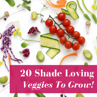 20 Vegetables That Grow in Shade