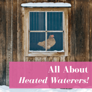 Heated Chicken Waterers