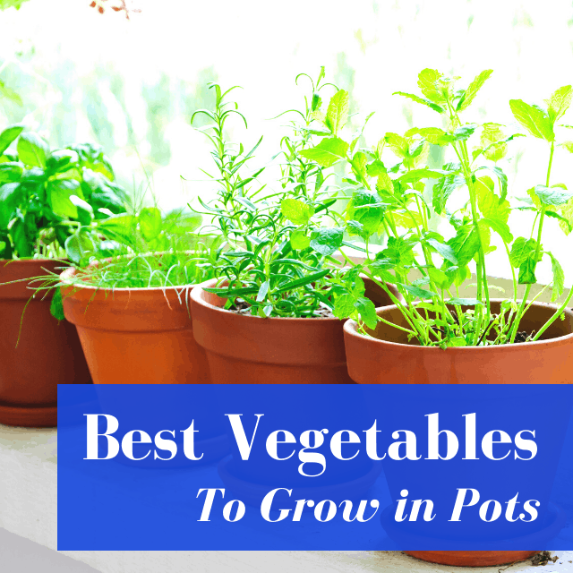 21 Best Vegetables to Grow in Pots (It's So Easy!)