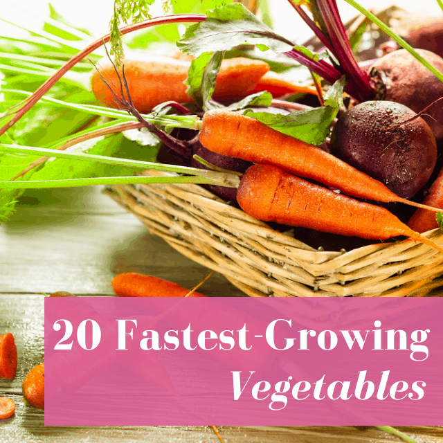 20 Fastest Growing Vegetables For A Super Quick Harvest!