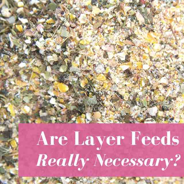 Is Layer Feed Really Necessary?