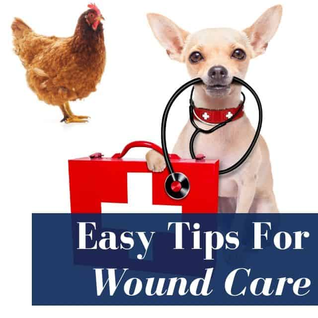 Easy Wound Care For Pets