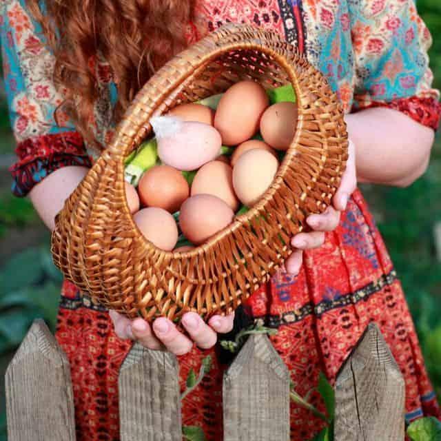 Raising Backyard Hens For Eggs Is Easy!