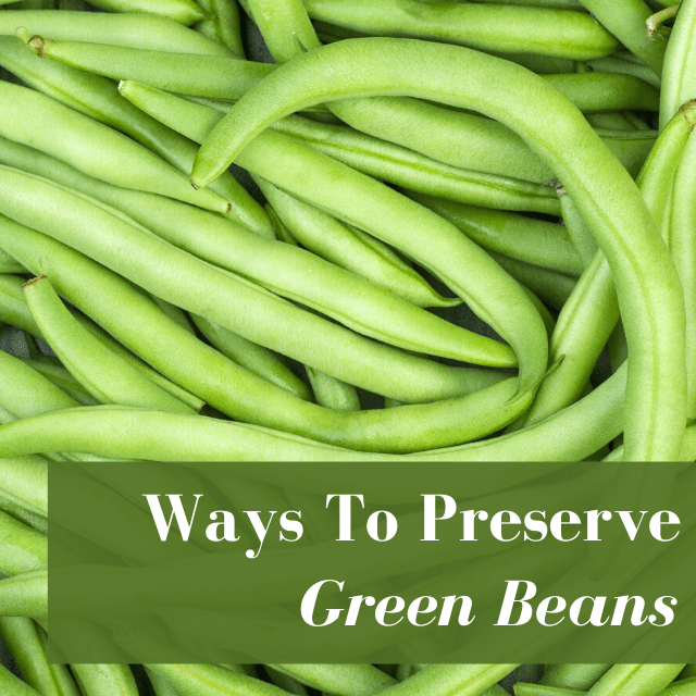 Preserving Green Beans At Home in 6 Easy Ways!
