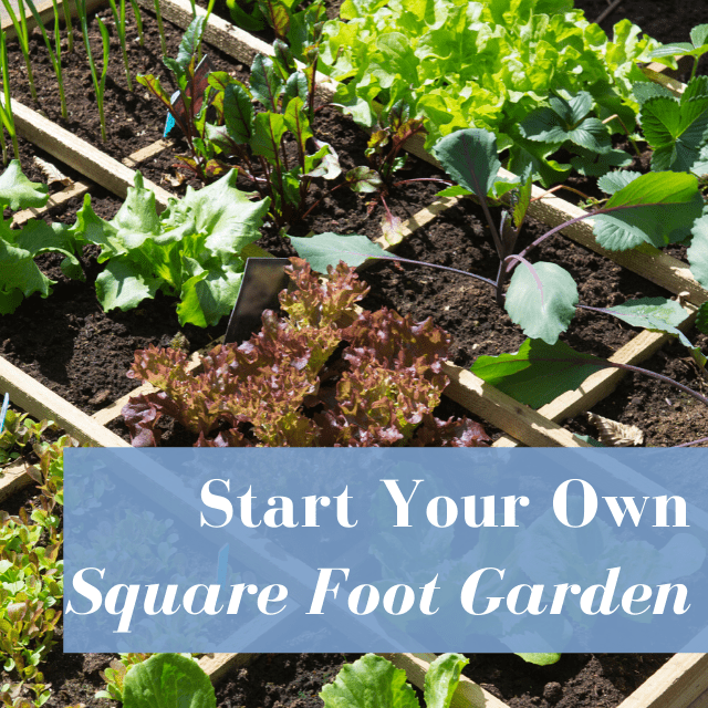 Start Square Foot Gardening With These Ideas