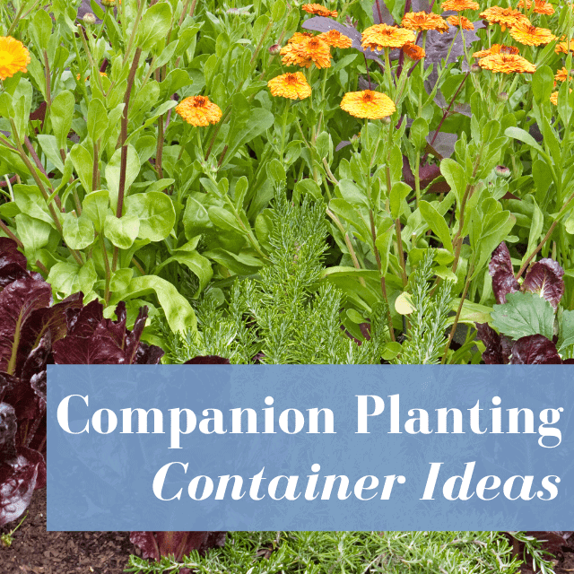 Companion Planting Container Gardening Ideas