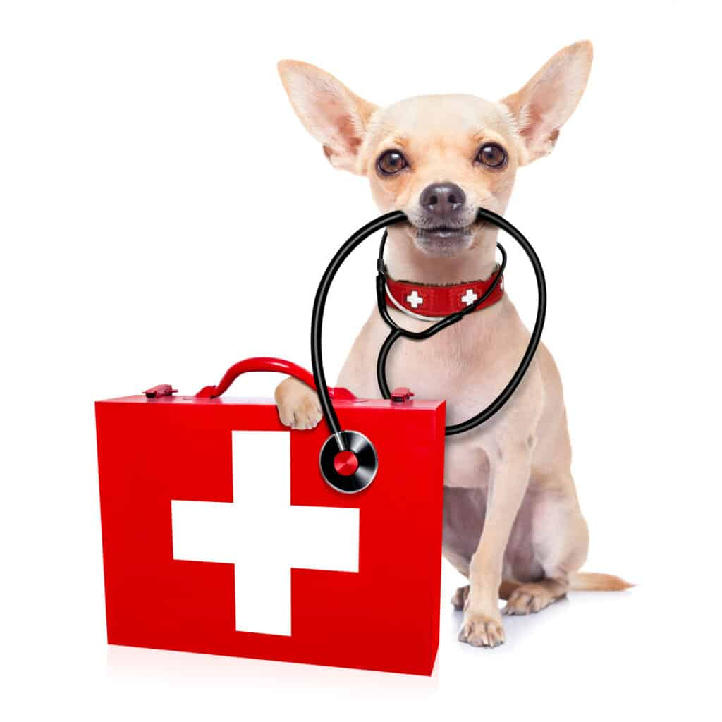insurance for pet at vet