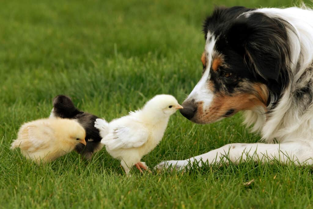 stopping dog from aggression with animals