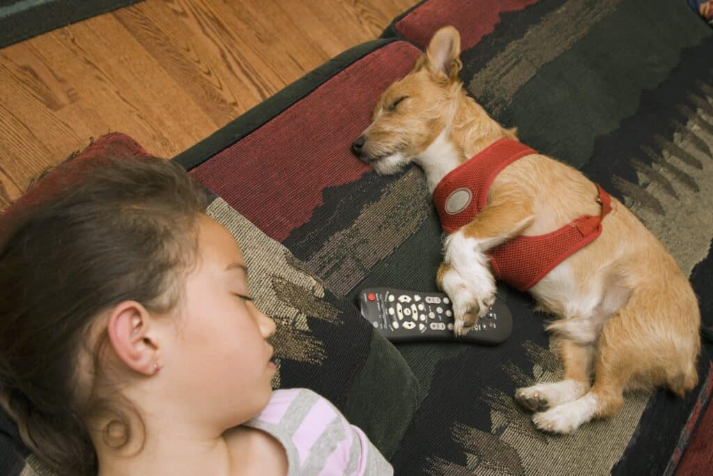 dog not aggressive with child