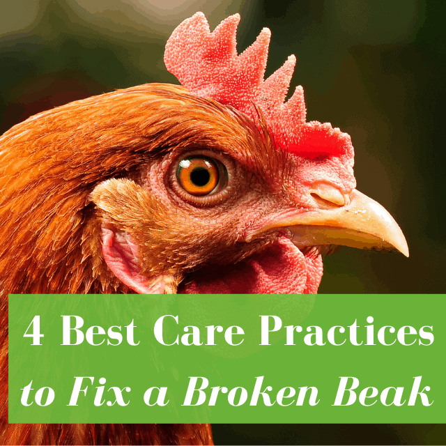 How to Fix a Broken Beak