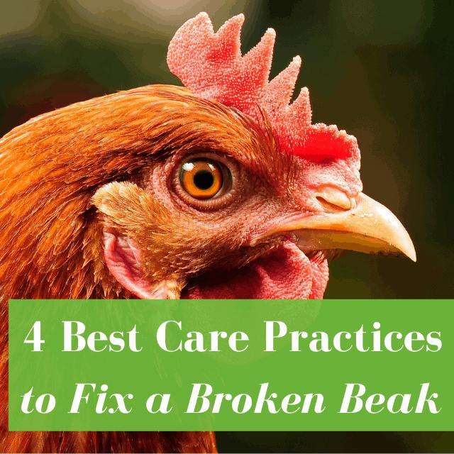How to Fix a Broken Beak