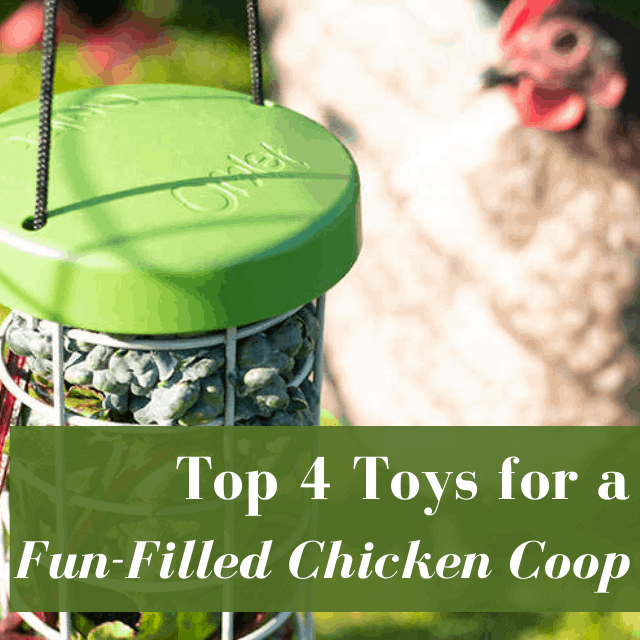 Top Toys for Chickens from Omlet